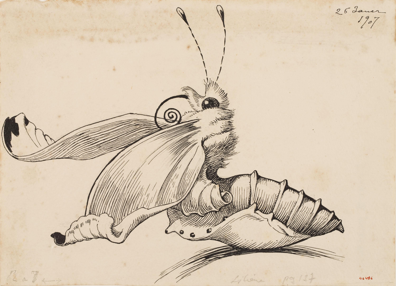 Gusano de seda convirtindose en mariposa Marmosete para el poema