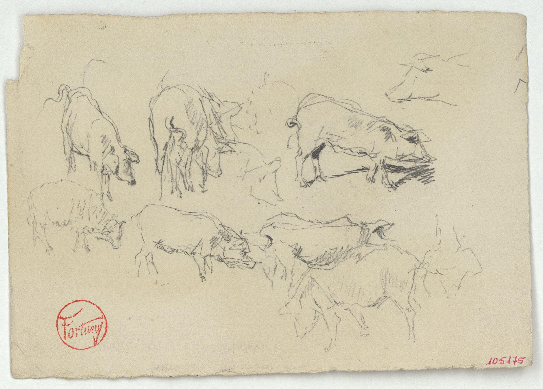 Marià Fortuny - Estudi per al quadre «Els porcs» - Cap a 1872