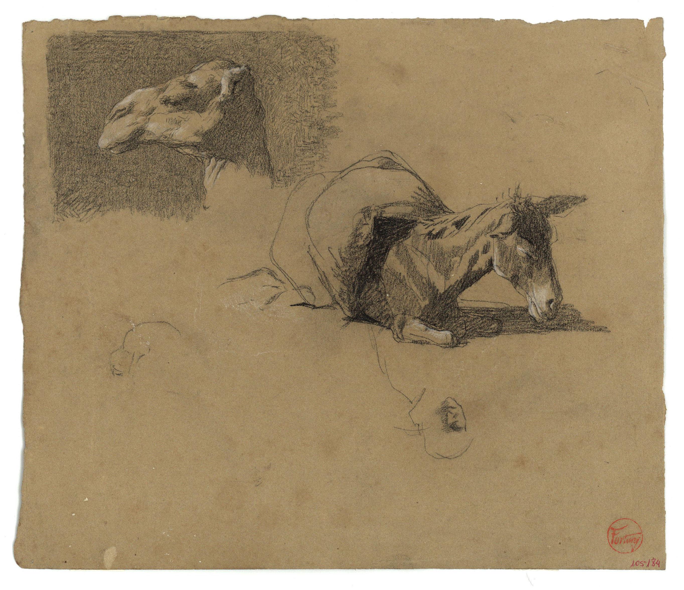 Marià Fortuny - Cap de camell i ruc (anvers) / Estudi de camell (revers) - Cap a 1862