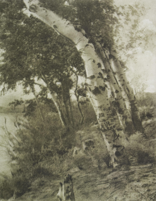 Joaquim Pla Janini - Los álamos de la ribera - Maig de 1952
