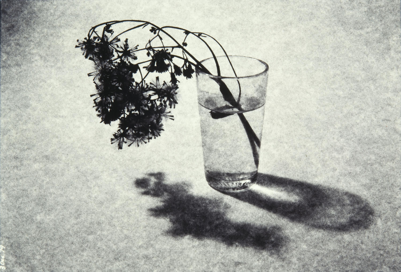 Toni Catany - El tassó - 1979 (tiratge 2005)