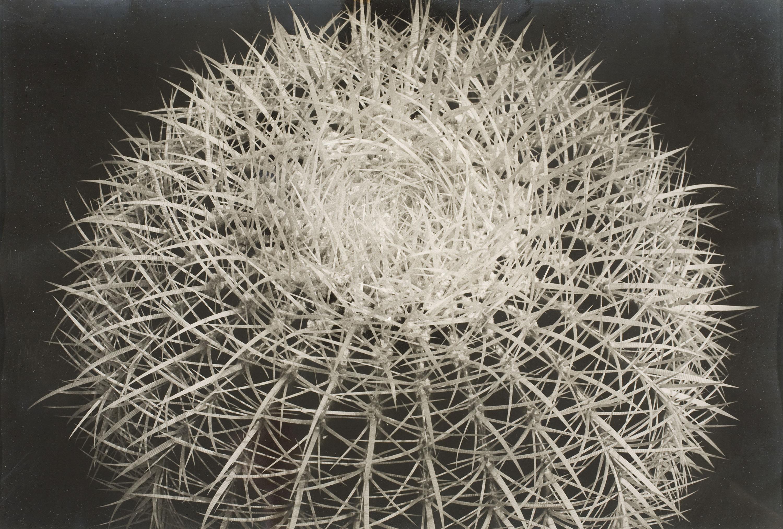 Emili Godes - Prickly Cactus - Circa 1930