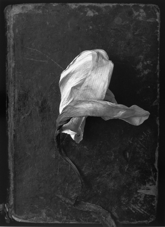 Humberto Rivas - Flower - 1991