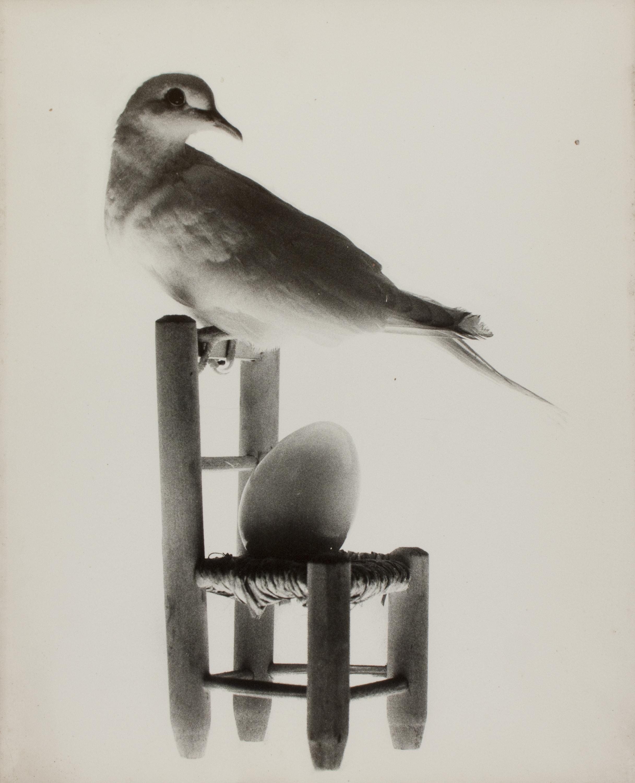 Oriol Maspons - Whana palomas (La tòrtora mentidera) - 1970