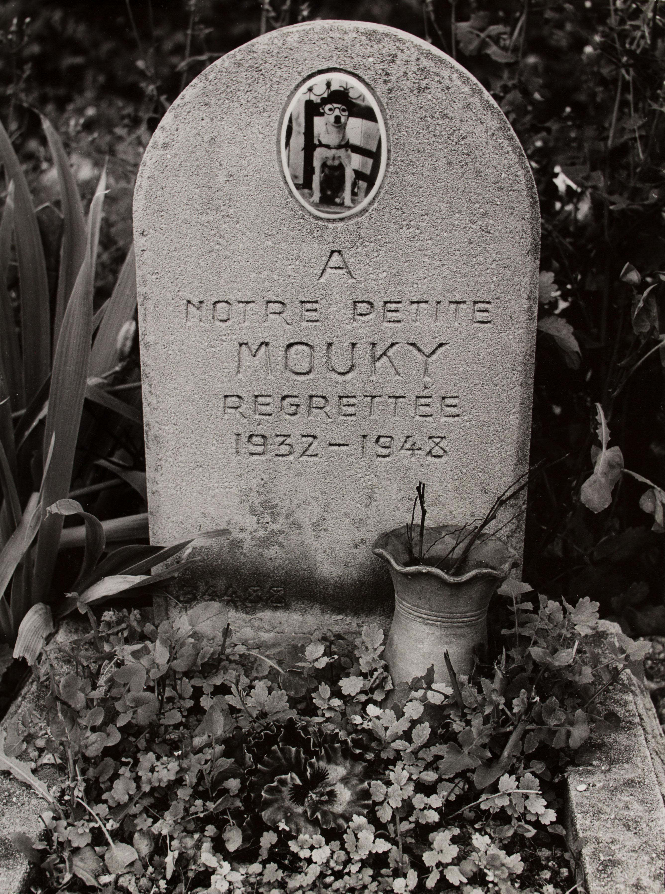 Oriol Maspons - Sense títol (Cementiri de gossos, París) - 1958