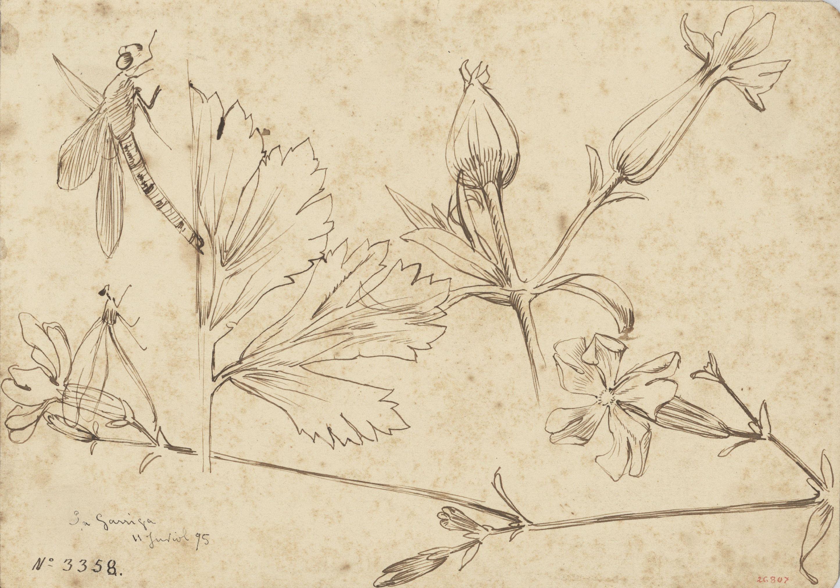 Alexandre de Riquer - Flors i fulles - 1895