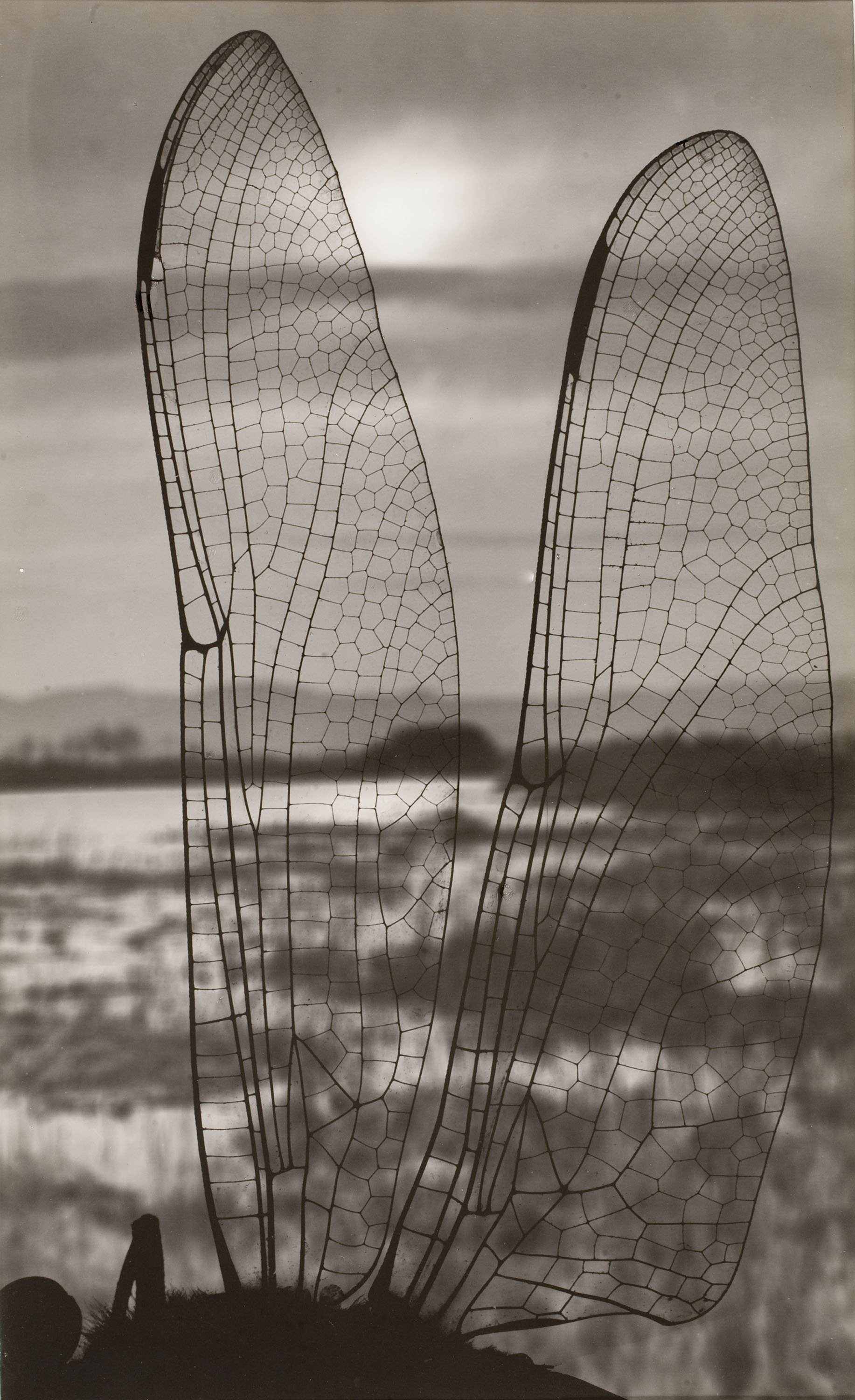 Emili Godes - Landscape Through Dragonfly's Wings - Circa 1930