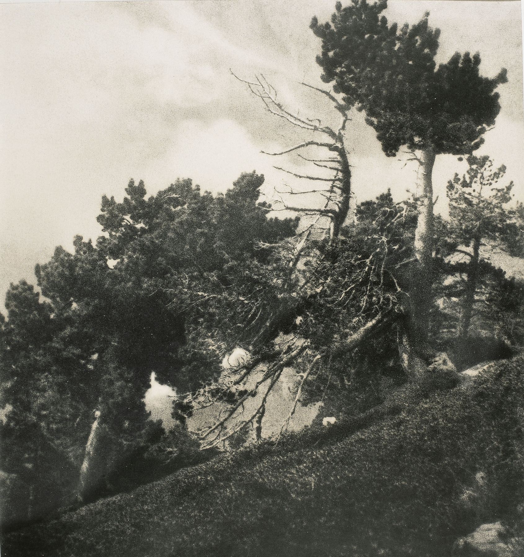 Claudi Carbonell - Bosc de la Verge - No datat