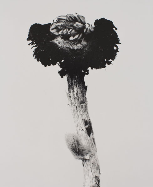Joan Fontcuberta - Fungus mungus (Herbarium) - 1982