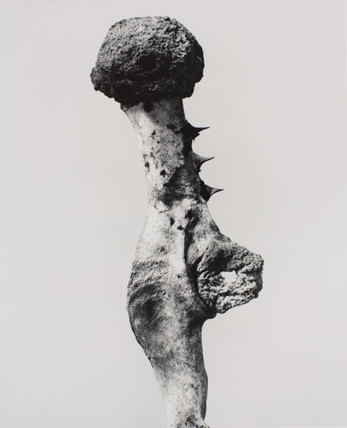 Joan Fontcuberta - Supratex horadatus (Herbarium) - 1982