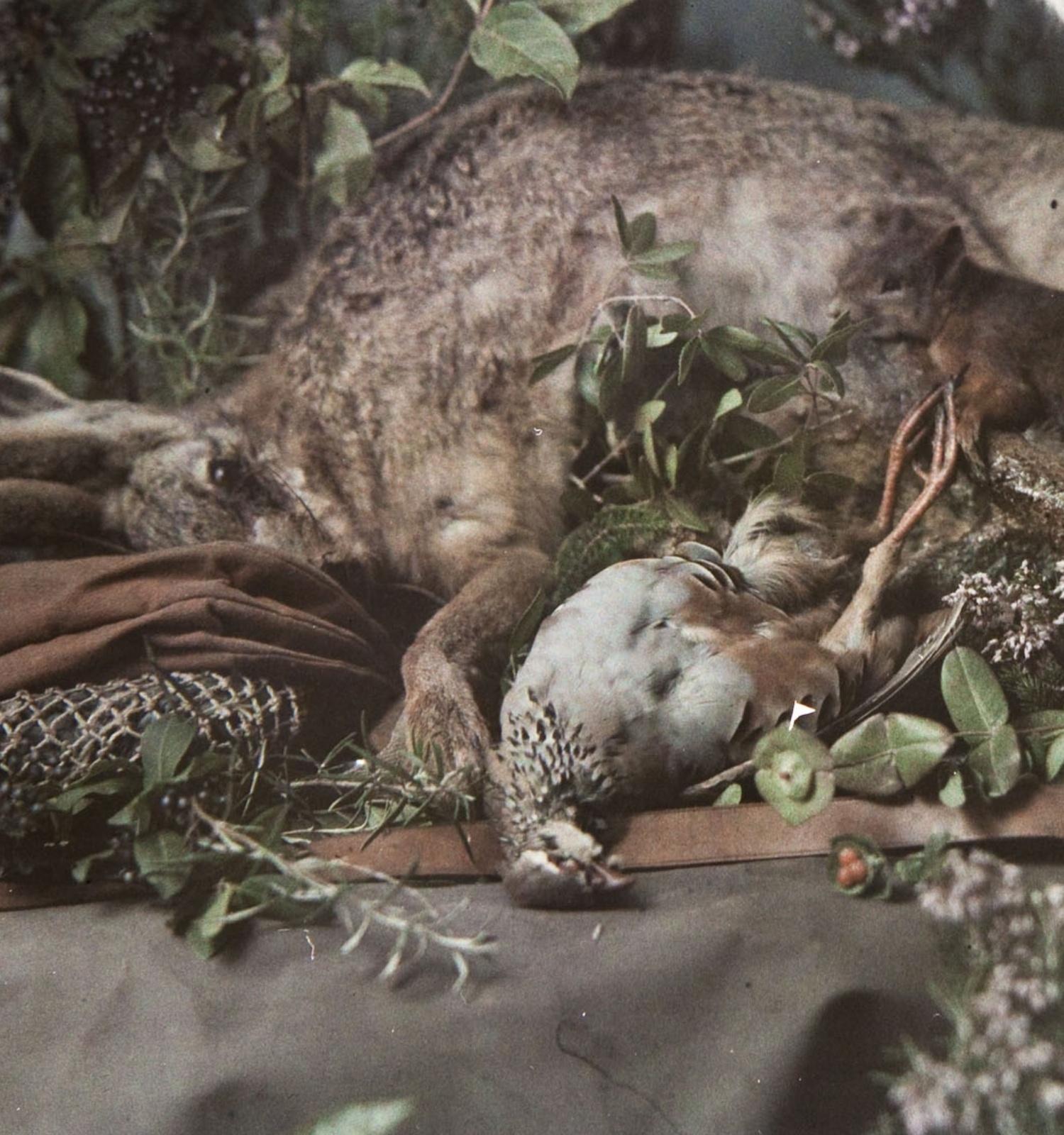 La música de las naturalezas muertas - itinerario virtual