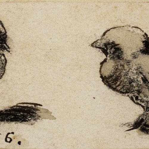 Modest Urgell - Pollets - Cap a 1861-1888