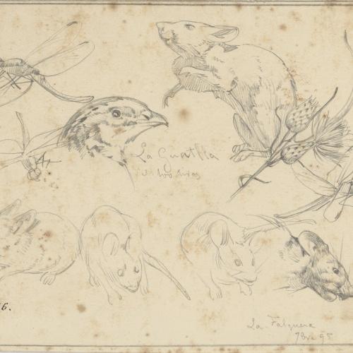 Alexandre de Riquer - Insectes, ratolins, guatlla i flors - 1895