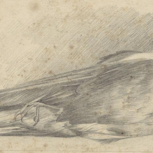 Alexandre de Riquer - Ocell mort - Cap a 1895