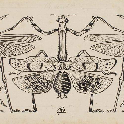 Apel·les Mestres - Saltamartins, espiadimonis i escarabats fent sardana. Capçalera de pàgina per al poema «Liliana» d'Apel·les Mestres - 1902