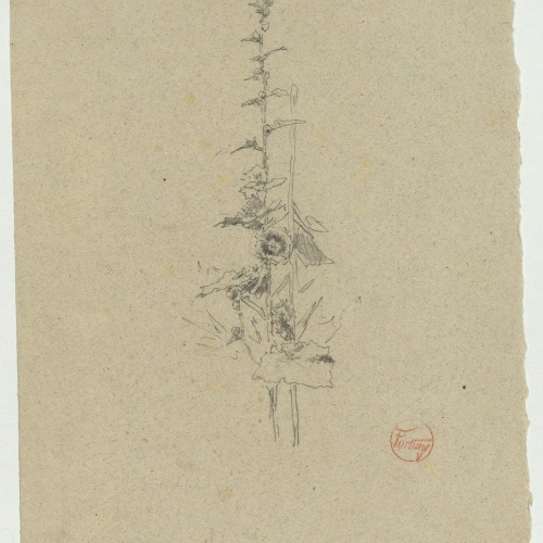 Marià Fortuny - Study for the engraving 'The Botanist' - Circa 1868-1869