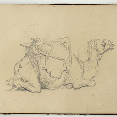 Marià Fortuny - Study of a camel - Circa 1860-1862