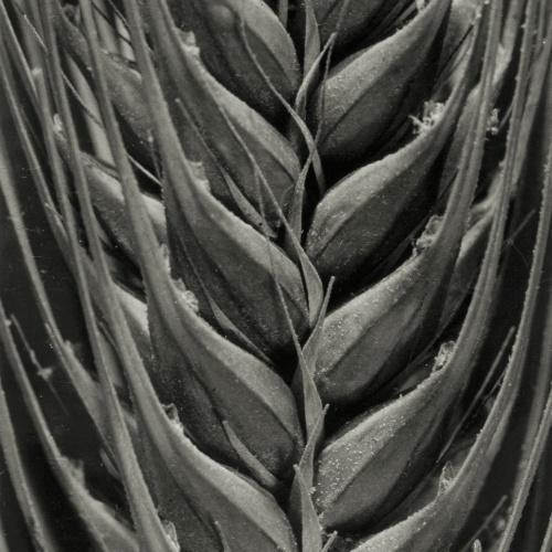 Emili Godes - Grass spike - Circa 1930