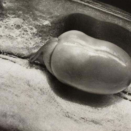 Emili Godes - Fava - Cap a 1930