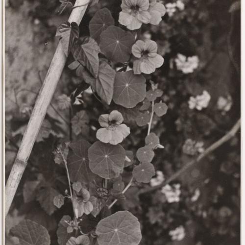 Otho Lloyd - Fulles i flors - Cap a 1948