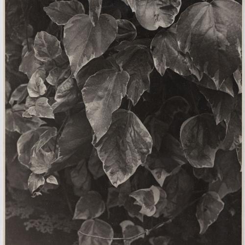 Otho Lloyd - Fulles - Cap a 1948