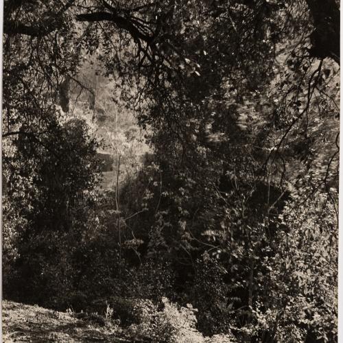 Otho Lloyd - Paisatge - Cap a 1950