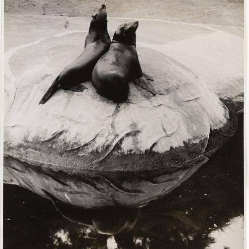 Otho Lloyd - Foques - Cap a 1944-1950