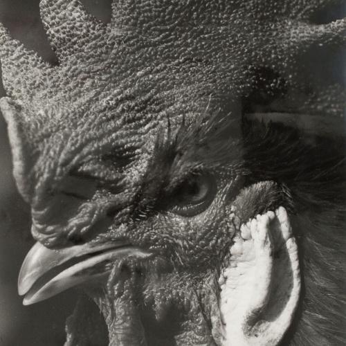 Emili Godes - Gall - Cap a 1930