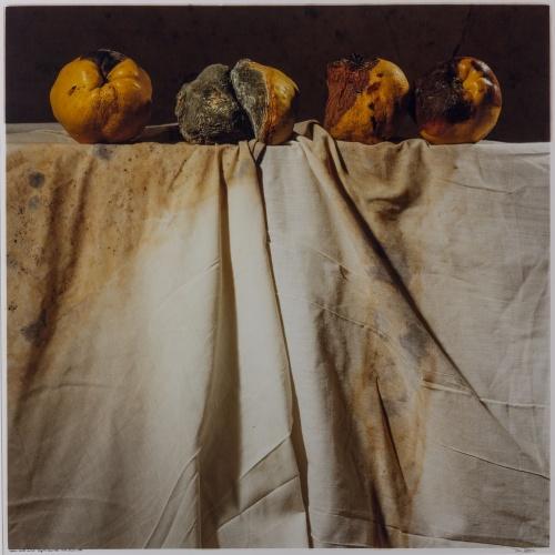 Toni Catany - Natura morta núm. 148 - 1988