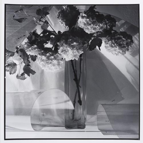 Toni Catany - Natura morta - 1981 (tiratge 2000)