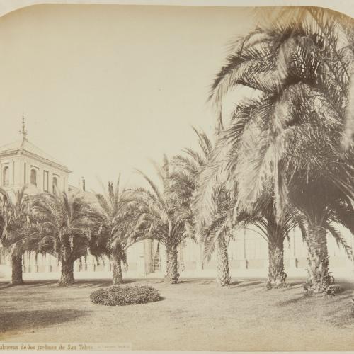 Jean Laurent - Sevilla. Palmeras de los jardines de San Telmo - Circa 1865