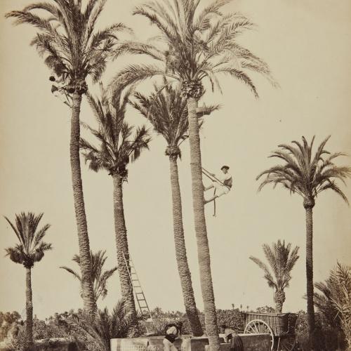 Jean Laurent - Elche (Alicante). Palmeras y huertanos - Circa 1865