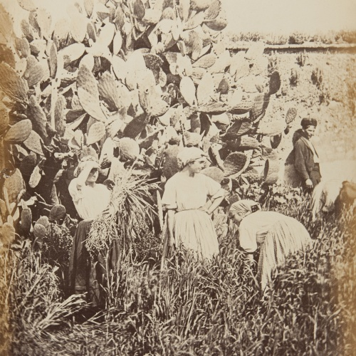 Jean Laurent - Cordove. Les moissonneuses (d'après nature) - Circa 1865
