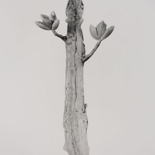 Joan Fontcuberta - Waxamissa contricta (Herbarium) - 1985