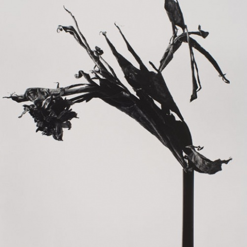Joan Fontcuberta - Rasputina ecléctica (Herbarium) - 1982