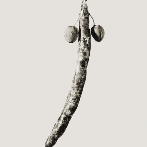 Joan Fontcuberta - Astrophytus dicotiledoneus (Herbarium) - 1984
