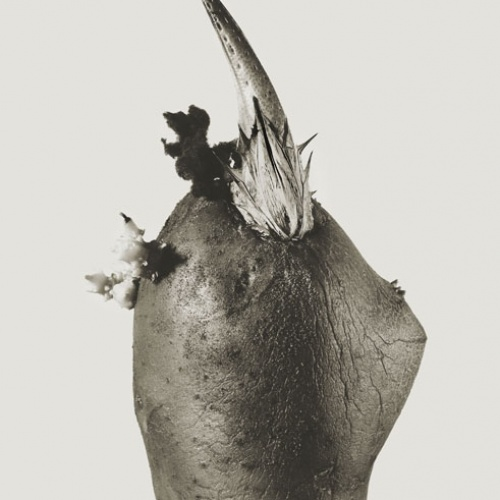 Joan Fontcuberta - Philosifux hyemale (Herbarium) - 1984
