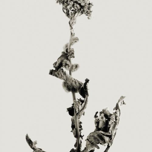 Joan Fontcuberta - Tiskovina navigata (Herbarium) - 1982