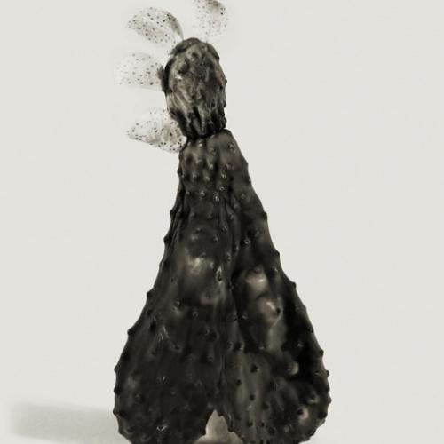 Joan Fontcuberta - Fallera carnosa (Herbarium) - 1982