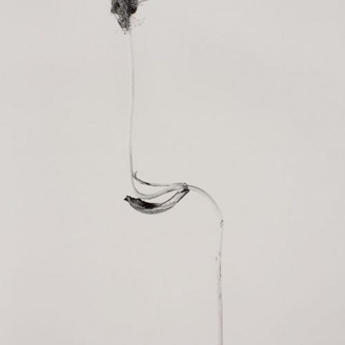 Joan Fontcuberta - Cascallus ferragosus (Herbarium) - 1982